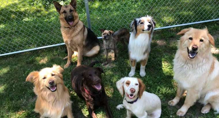 Choosing a Doggy Daycare, Part 2