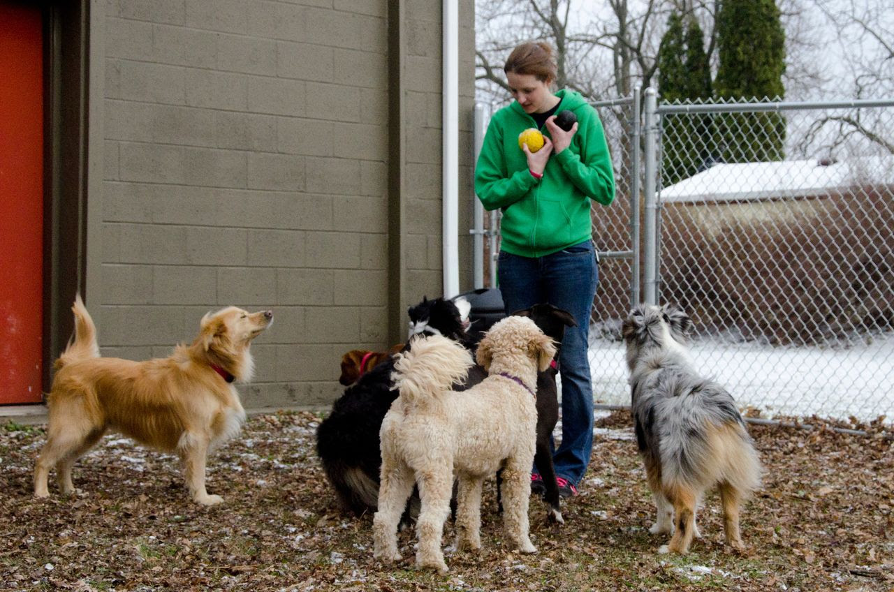 Choosing a Doggy Daycare, Part 1