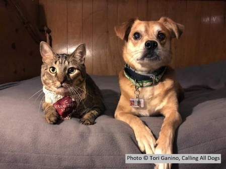 From Foes to Friends: Using Positive Reinforcement to Teach a Cat and Dog to Happily Coexist
