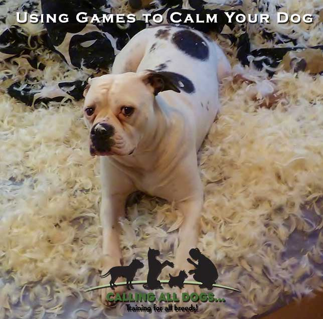 Using Games to Calm Your Dog