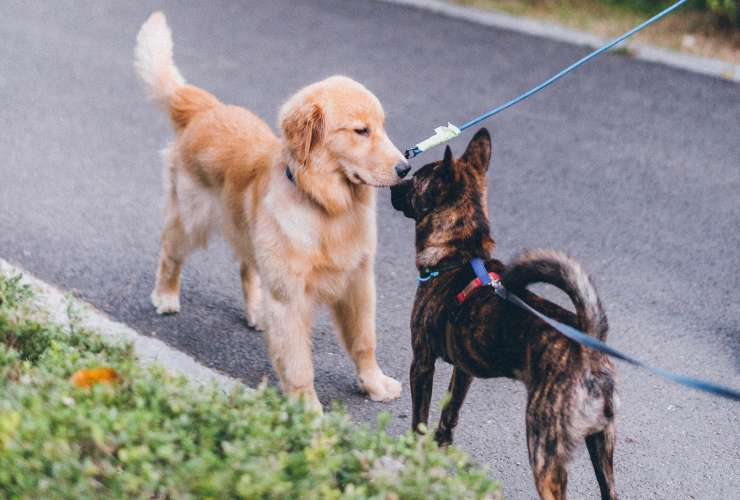 """Just Say """"No"""" to On-Leash Greetings"""