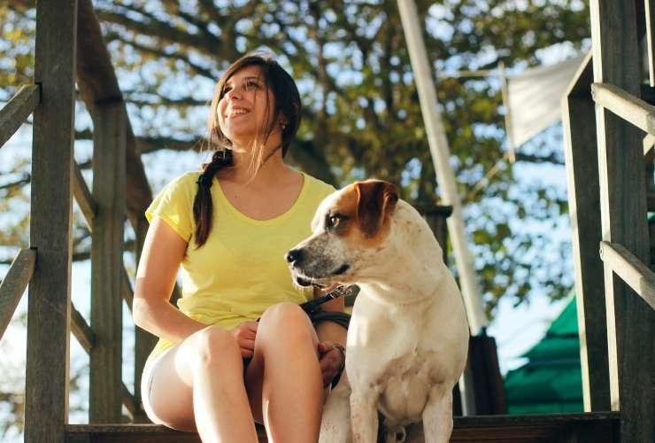 The Calm Dog Method
